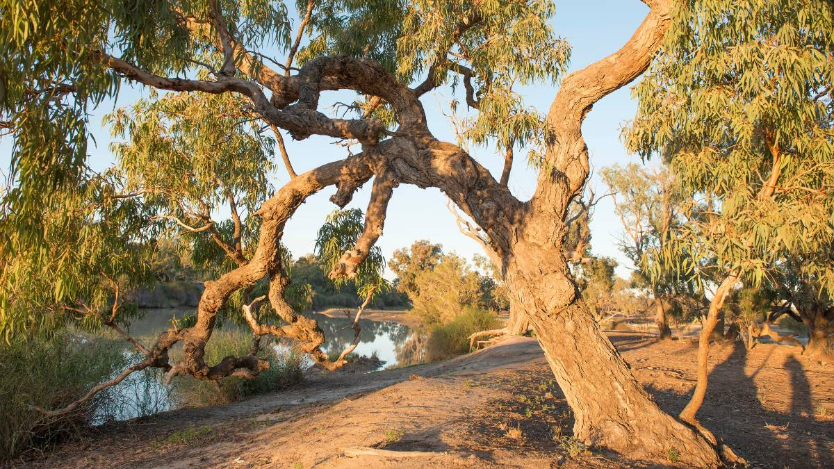 Under the shade of a coolibah tree. Picture: Shutterstock